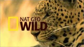 Nat Geo Wild HD New Advert 1080p 2012