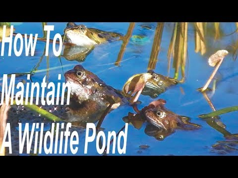 How To Maintain A Wildlife Pond