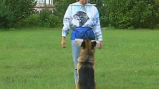 Schutzhund With Gottfried Dildei- Advanced Obedience