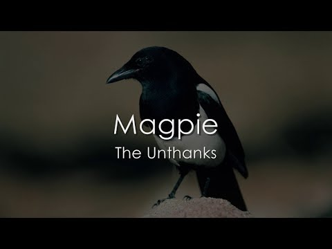 Magpie - The Unthanks - LYRICS
