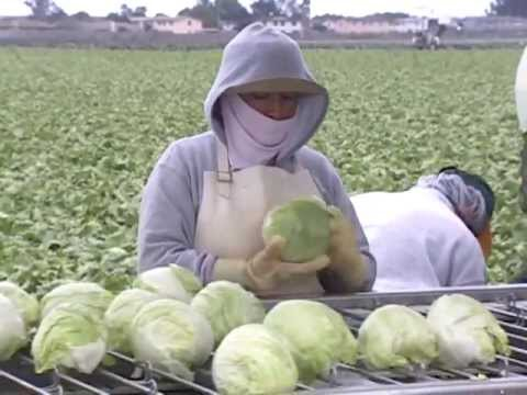 Fruits, vegetables and food safety: Food Safety Begins On The Farm