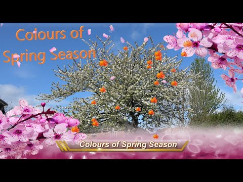 Spectacular Colours Of Spring Season In England