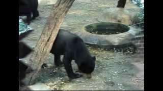 Geo 2010 1003020 Ophy Persebaran Fauna Tipe Asiatis di Bagian Barat Indonesia