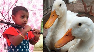 Raa Fun Kids Vibishna Zoo Funny Video | The Ultimate Funny Kids Compilation