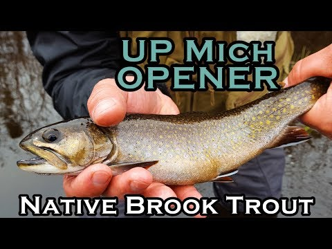 Early Spring | Native Brook Trout
