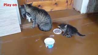 Кошки и молоко. Cats and milk.