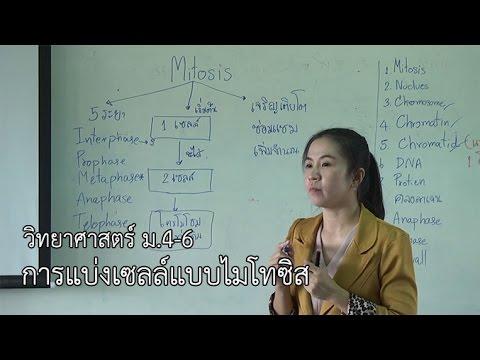 วิทยาศาสตร์ ม.4-6 การแบ่งเซลล์แบบไมโทซิส ครูกมลรัตน์ ฉิมพาลี