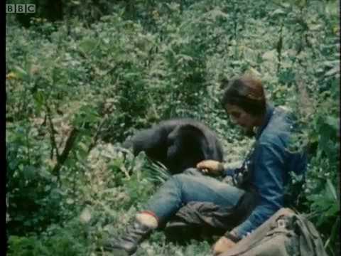 Dian Fossey Gorillas in Rwanda