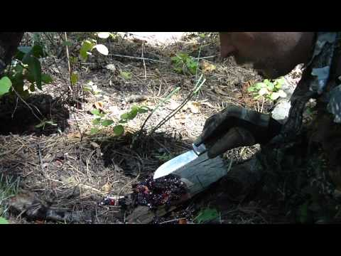 Survivor Dan Bear scat eating to survive!