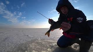 Рыбалка на Волге Ловля Окуня и Берша на тюльку Зимняя рыбалка 2021