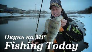 Ваговий окунь на Москві-Ріці - Fishing Today