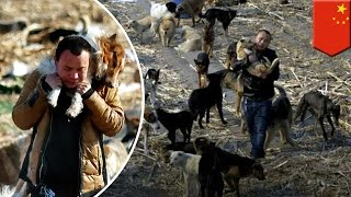 Eating dog meat: Millionaire spends fortune on home for dogs destined for slaughter - TomoNews