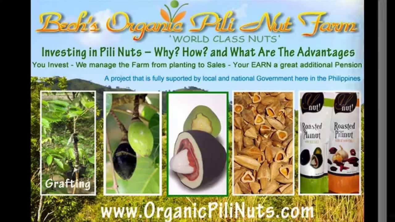 how to make pili pili oil