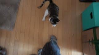 매복해 있다가 집사에게 냥냥펀치 날리는 고양이