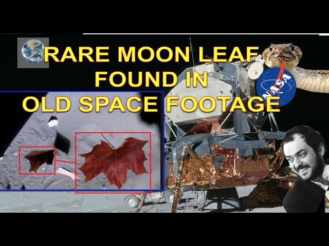 RARE MOON LEAF FOUND IN OLD SPACE FOOTAGE
