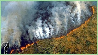 What If The Amazon Rainforest Burned Down?