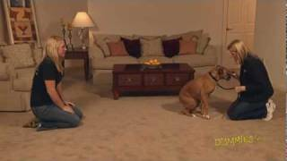 How To Train Your Dog To Come When Called For Dummies