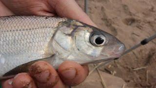 Рыбалка с ночевкой на фидер. Река Десна