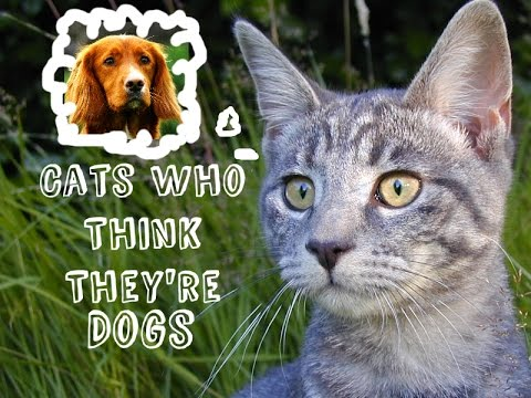 Funny Cute Cats Who Think They're Dogs