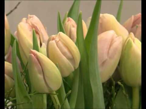 Was Hält Tulpen Wirklich Frisch Youtube