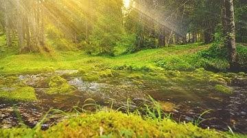 불안한 마음이 사라지는 숲 속 명상음악 🎵 아침음악, 요가음악, 치유음악, 마음이 편안해지는 음악 (Pure Mind)