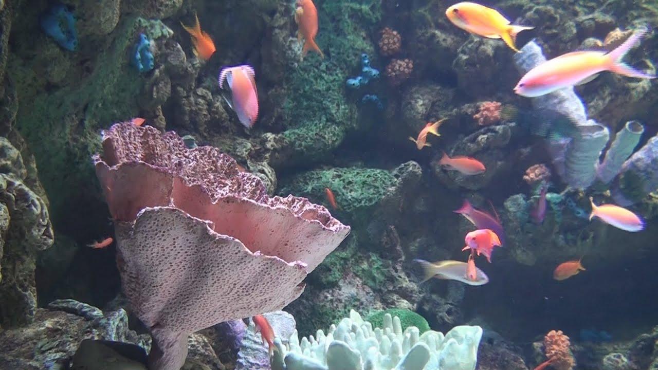 Professional Aquariums Big Salt Water Fish Tanks