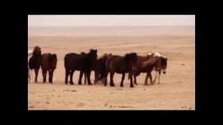 """Телеканал """"Домашние животные"""" - Лошади семьи Саи"""