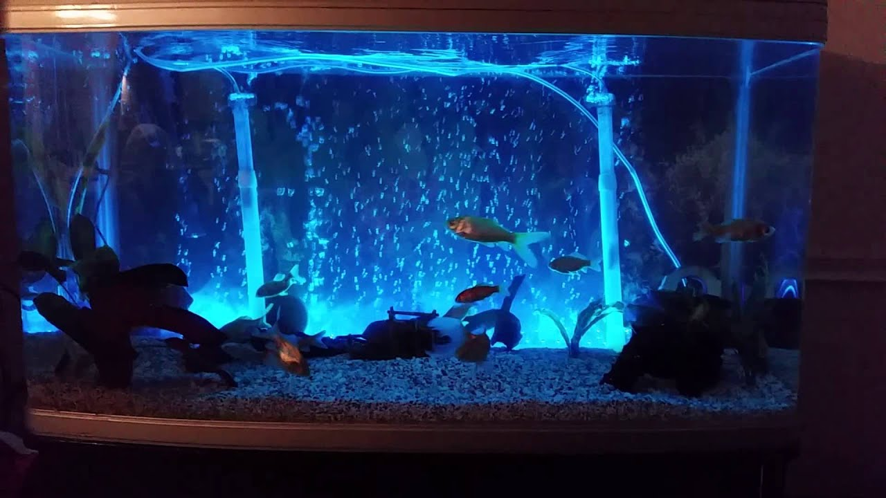Led fish tank lights changing colour youtube for Fish tank lighting