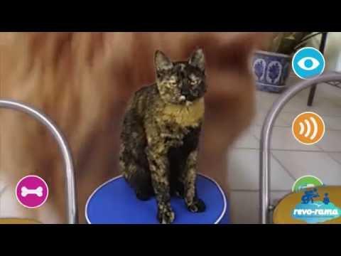 Le Revo-Rama teste les objets connectés pour les chats !