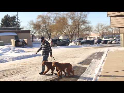 TYD60 Moment- How to Train Two Dogs in the Same Family- Ty the Dog Guy