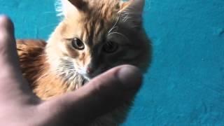 больной кот:)))))))