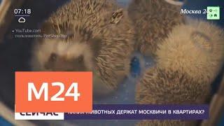 Каких животных держат москвичи в квартирах - Москва 24