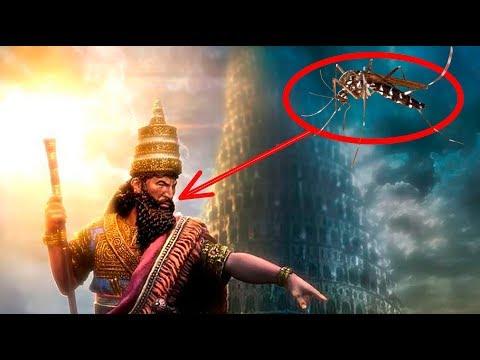 Как комары уничтожили