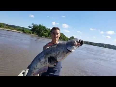 Trotline Fishing for Catfish - Catfishing with Bluegill and Cut Bait - Missouri River 2016