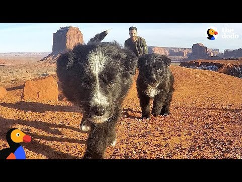 Puppies Found In Desert Revisit Spot They Were Found With New Dad | The Dodo