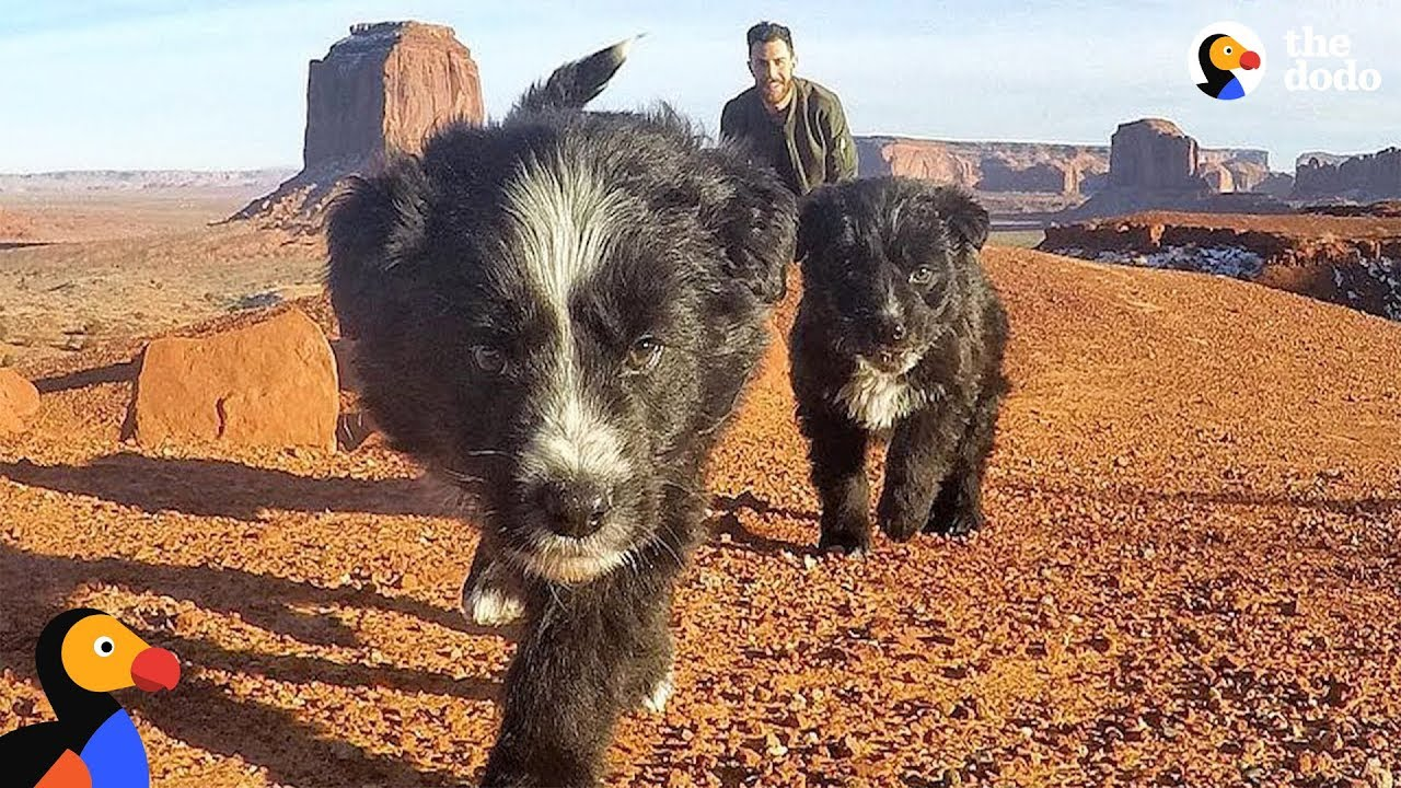 Puppies Found in Desert Revisit Spot They Were Found With New Dad