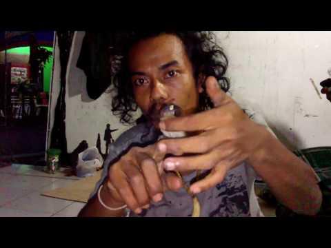 Cara Meloloh Secara Tradisional  Anak Burung Bondol/Pipit Jawa (Lonchura leucogastroides)