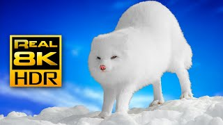 How a Tiny Arctic Fox Survives Winter? | Amazing Wildlife in 4K HDR 60FPS - 8K HDR