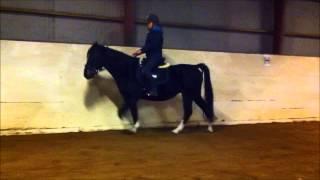 Sådan får du hesten til at strække sig frem og ned