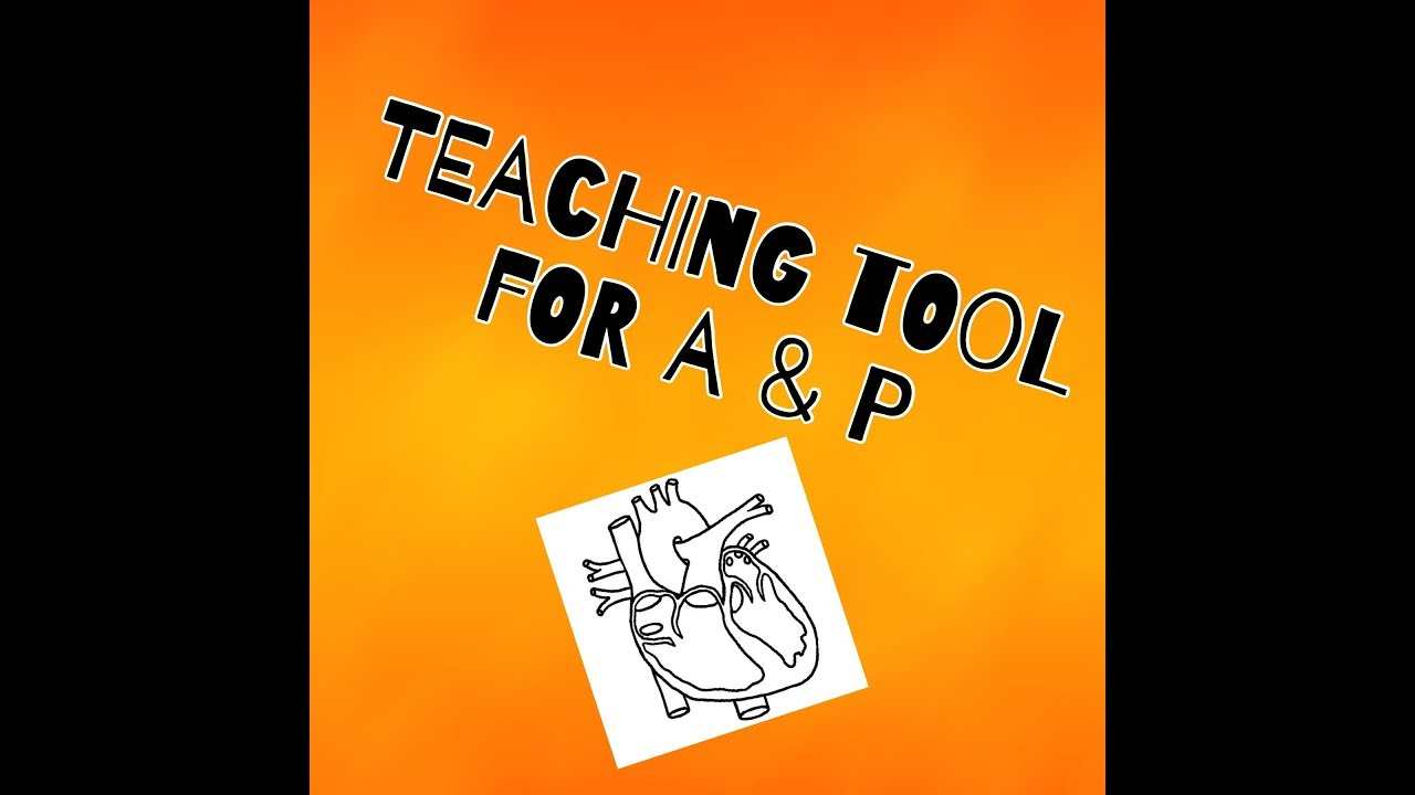 Cosmetology Teaching Tool for the Anatomy & Physiology Chapter - YouTube