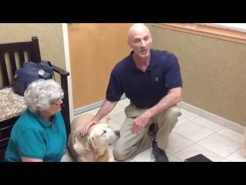Pet Acupuncture in Glendale AZ | Vets in Glendale AZ | Stetson Hills Animal Hospital