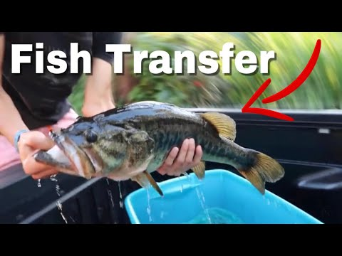 Transfering THUMP (8lb Bass) to a BIGGER Pond...