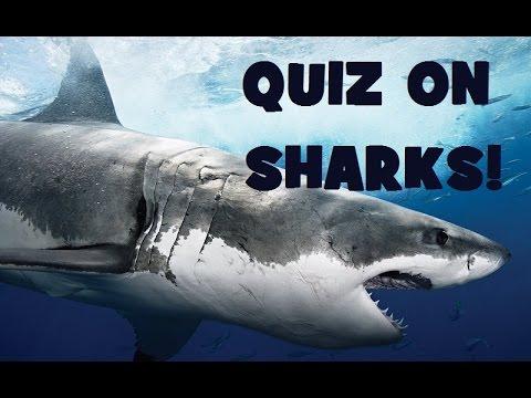 Hard QUIZ On SHARKS! - Animal Trivia Test