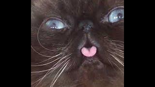 Kitty Cat Blowing Bubbles    ViralHog