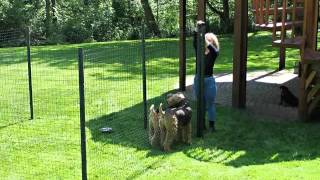 Dog Fence Ideas | Picture Collection Of Fences For Outdoor Pets