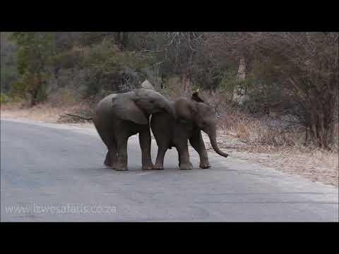 Baby Elephants Having Fun... The Cutest Video Ever!!!