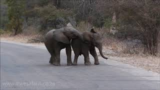 Baby Elephants Having Fun... The Cutest Video Ever!!!