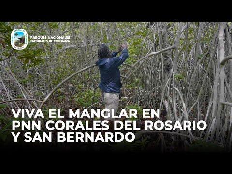 Viva el manglar en PNN Corales del Rosario y San Bernardo