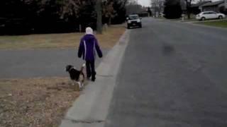 Beagle Off Leash w/ 8y/o Girl #2