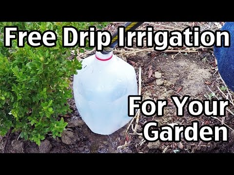 Free Drip Irrigation For Your Garden